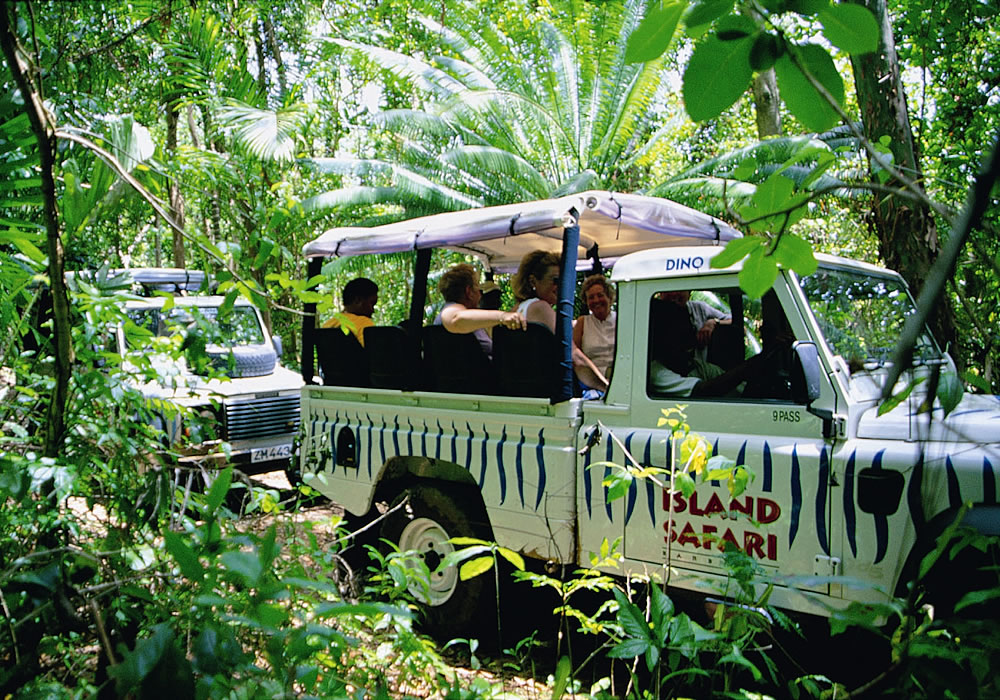 barbados-safari-tour-forest
